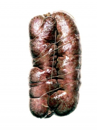 Salami #6 (Signed Limited Edition Print). Hans Gissinger