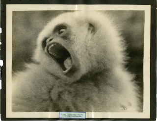 Archive of 163 original travel photographs, 1922-1927. Ernest B. Schoedsack, Merian C. Cooper,...