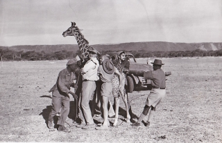 Hatari (Original photograph from the 1962 film). Howard Hawks, Harry Kurnitz Leigh Brackett,...